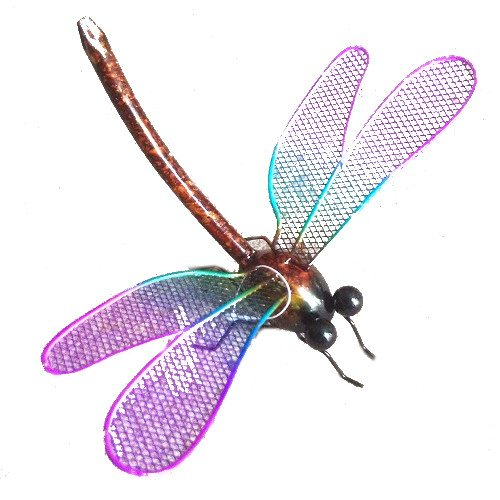 Small Colourful Dragonfly